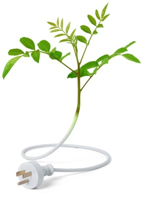 Image of plant growing from electrical cord